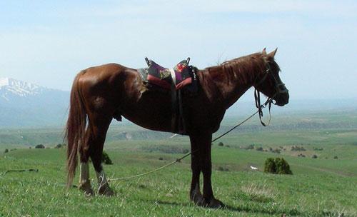 adaev-horse-1